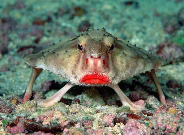 Риба, прилеп, начервени устни,