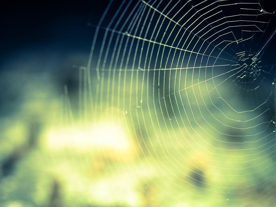 бъдеще, мрежа, паяк, паяжина