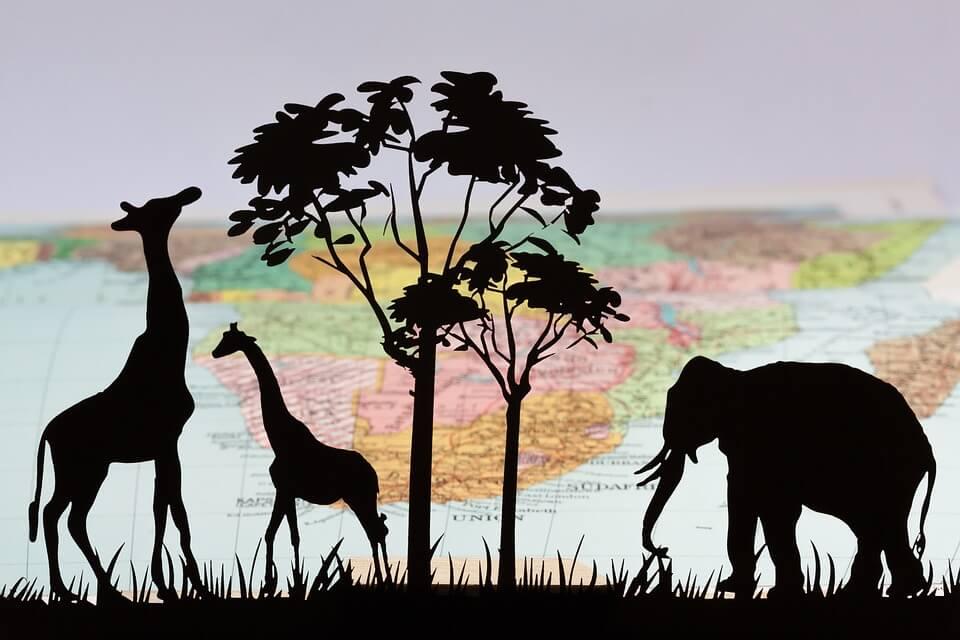 жираф, екологична ниша