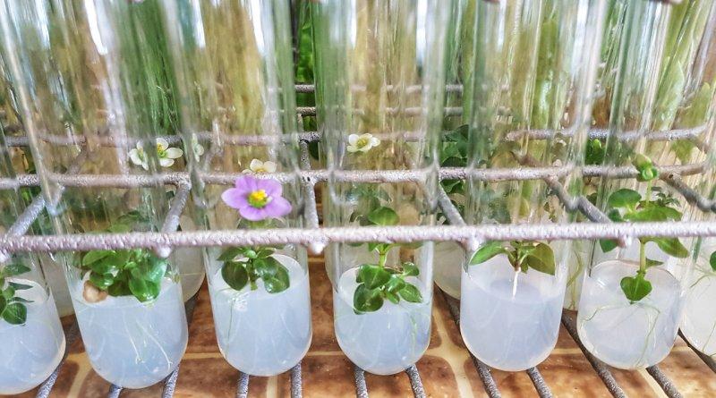 Цвете в епруветка алтернатива на букетите